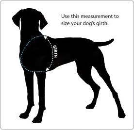 een rugzak voor je hond, laat je hond een rugzak dragen, foto van Ruffwear