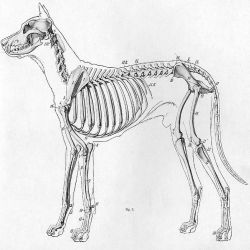 verzorging van je hond, vaccineren, vachtverzorging, nagels knippen enz., foto van wikimedia