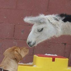 Kennismaken met andere dieren om te socialiseren