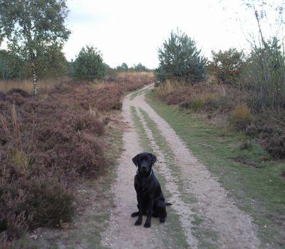 Wandelen op de hei met je hond