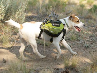 een rugzak voor je hond, backpacken met de hond, foto van Ruffwear